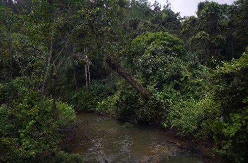 Wald in Analamazaotra