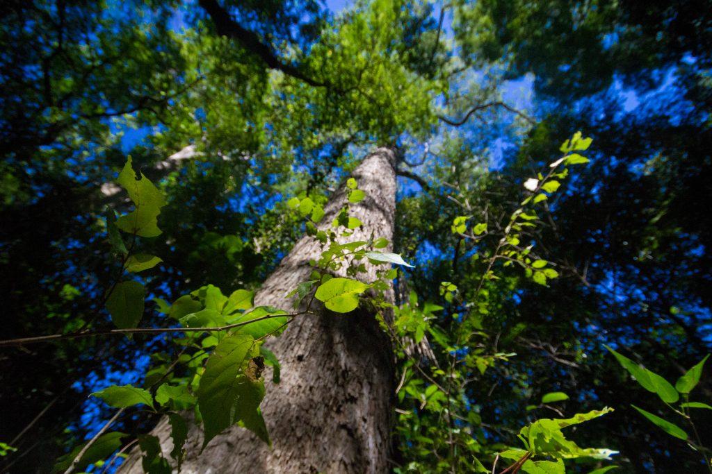 Bäume in Ankarafantsika