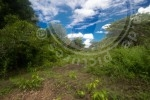 Habitat von Furcifer pardalis, Ankaramy