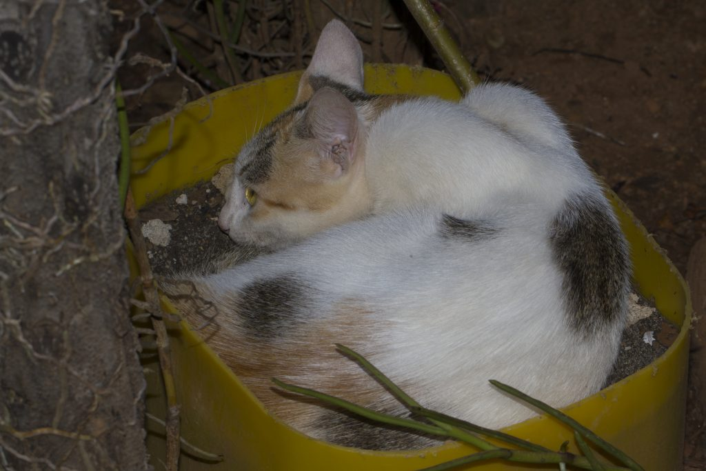 Katzen in Sambava