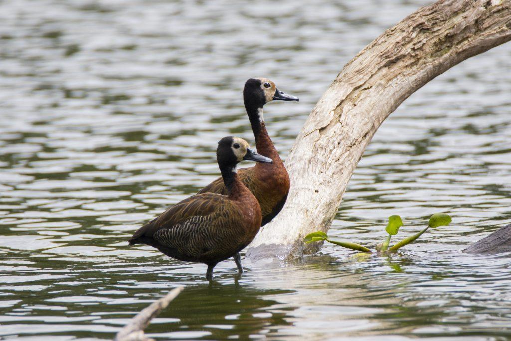 Am Vogelsee