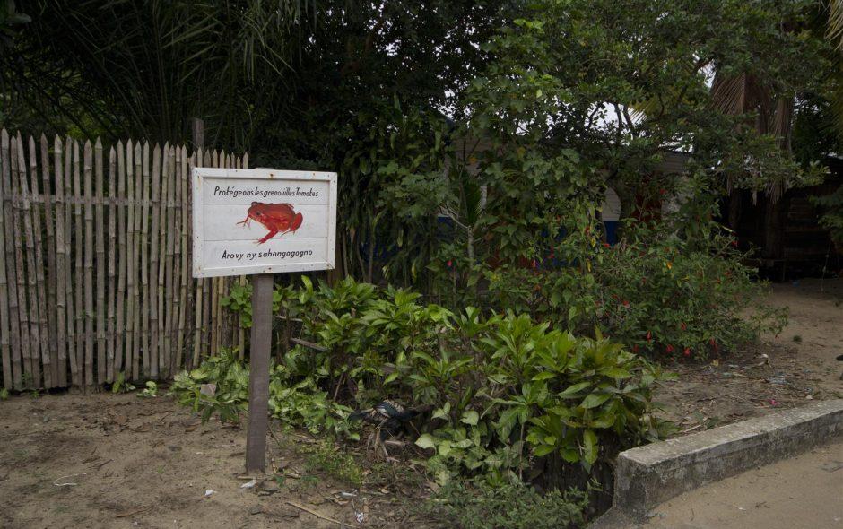 Wo die Tomatenfrösche wohnen