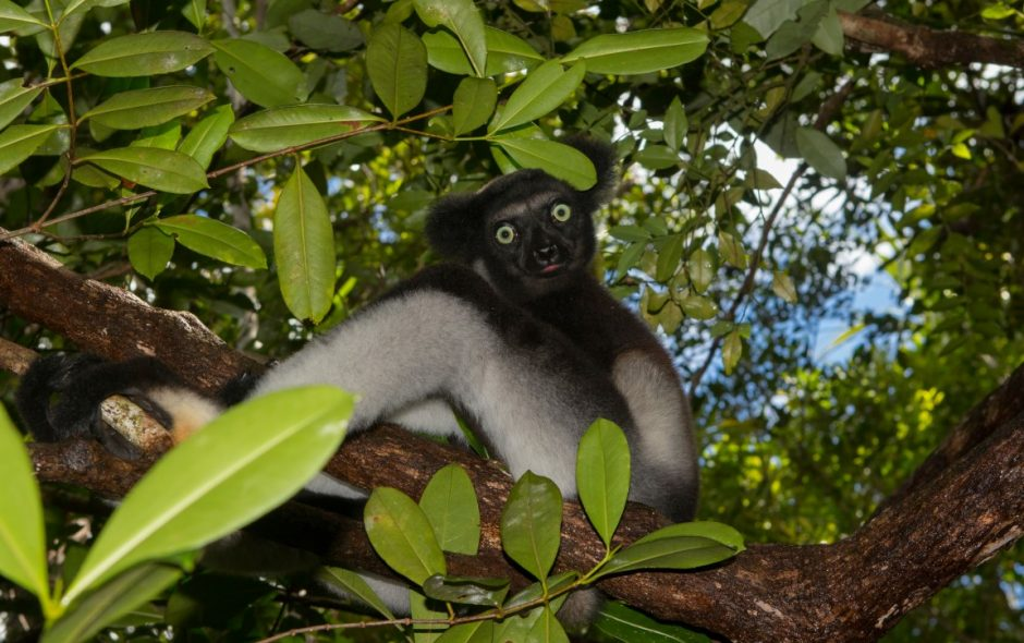 Entspannung mit Indris