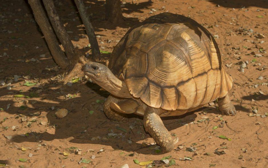 Der Tag der goldenen Schildkröten