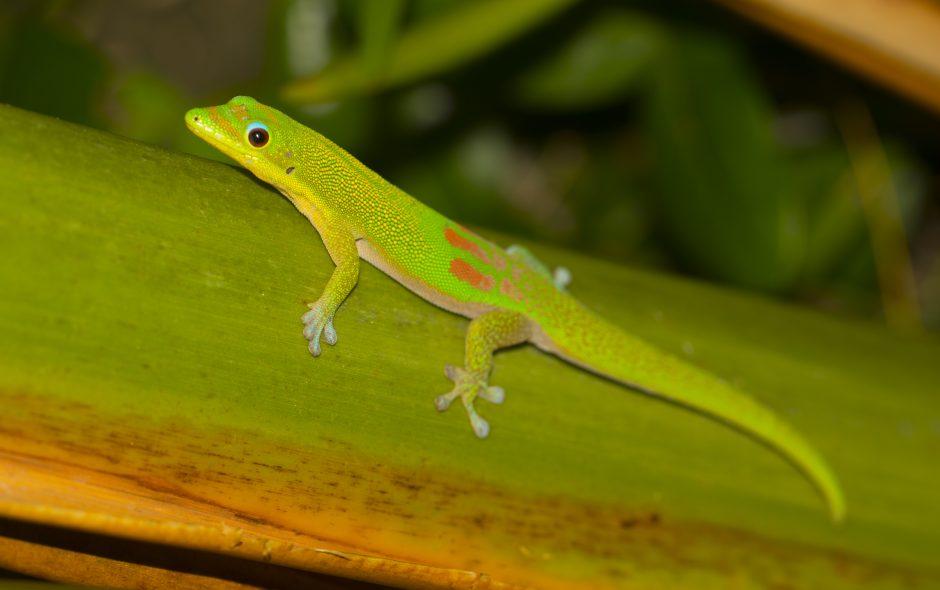 Zwischen Geckos und Stechmücken