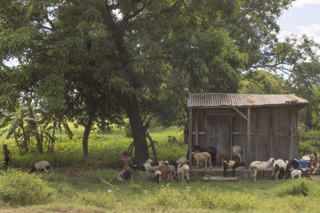 Zwischen Ambilobe und Sirama