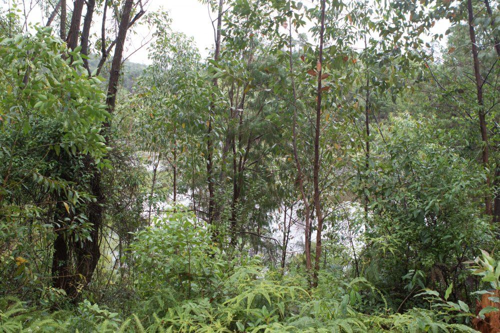 Wald hinter Ambositra