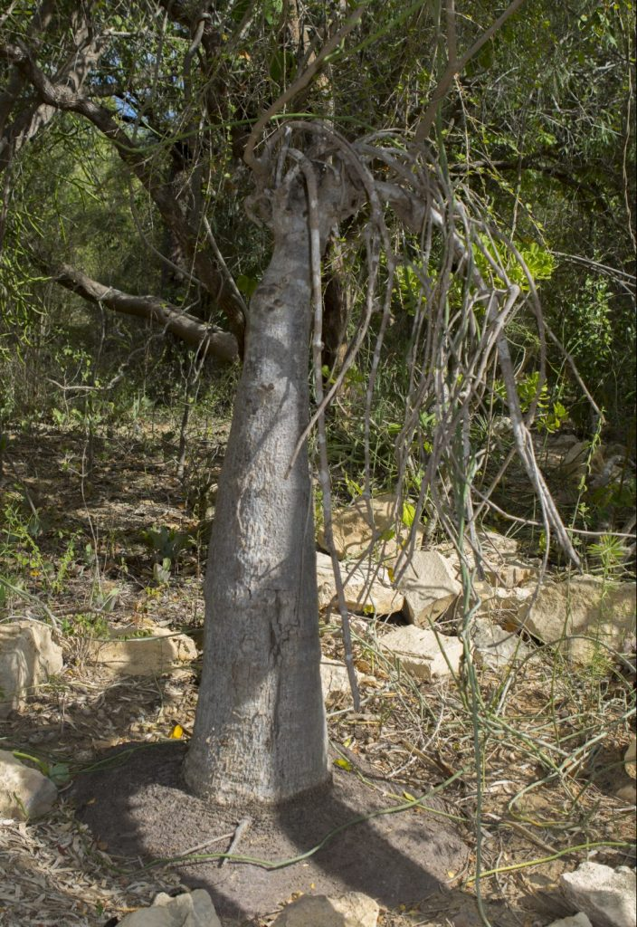 Arboretum Antsokay