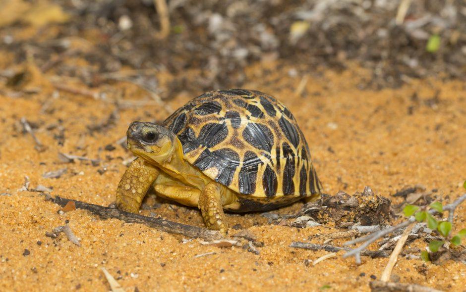 Schildkröten und Sonnenschein
