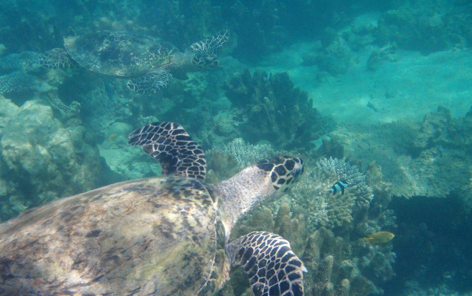 Das Unterwasser-Paradies von Nosy Tanikely und Feiern unter Freunden