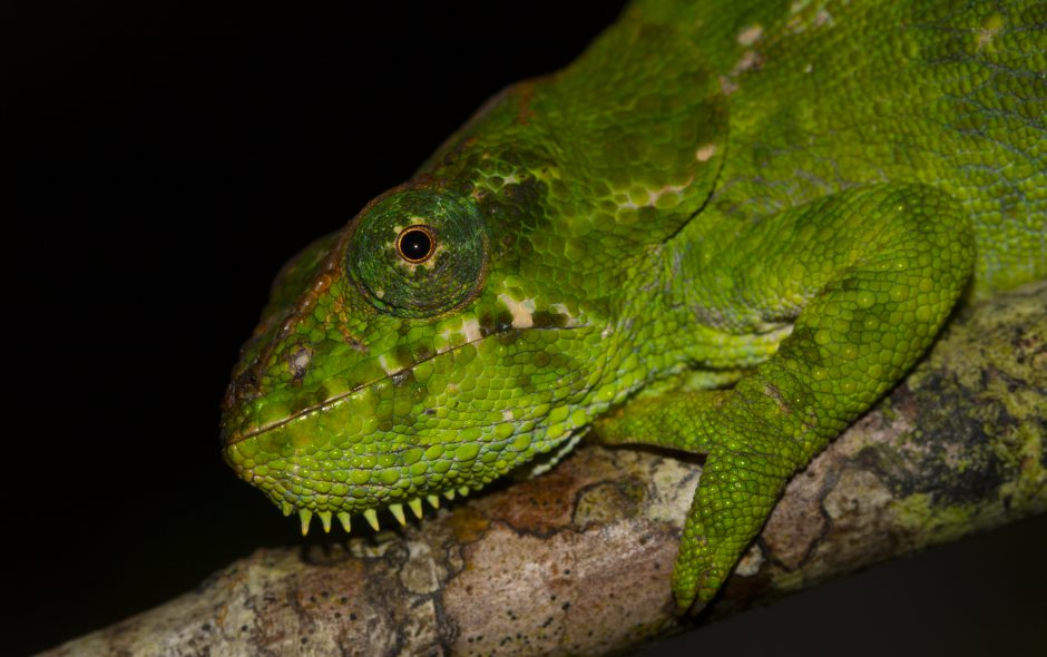 Madagaskars Chamäleonparadies