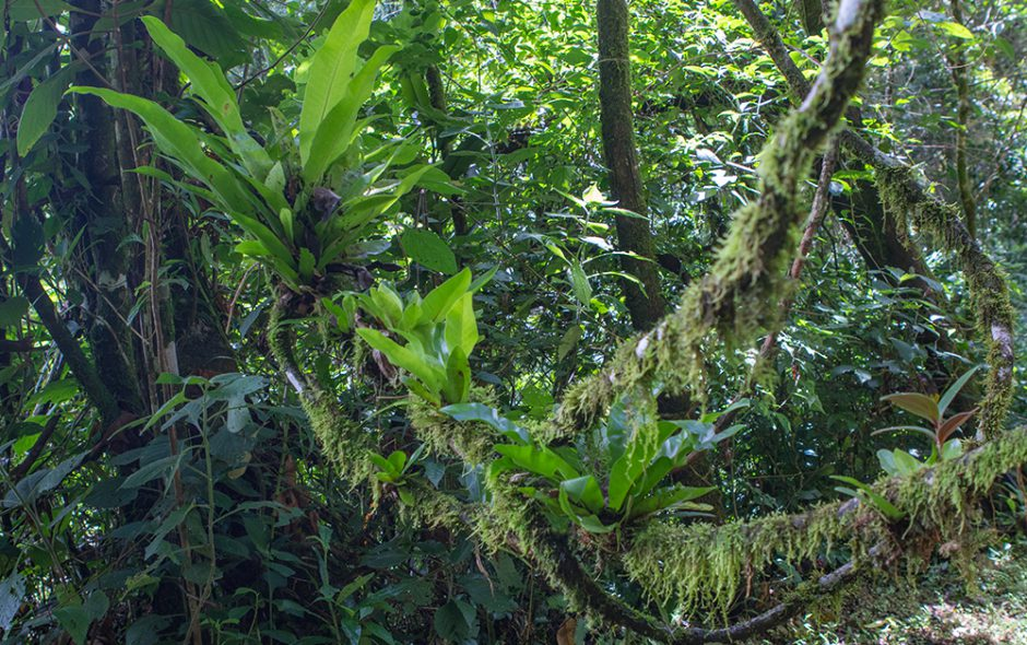 Zur Regenzeit im Regenwald