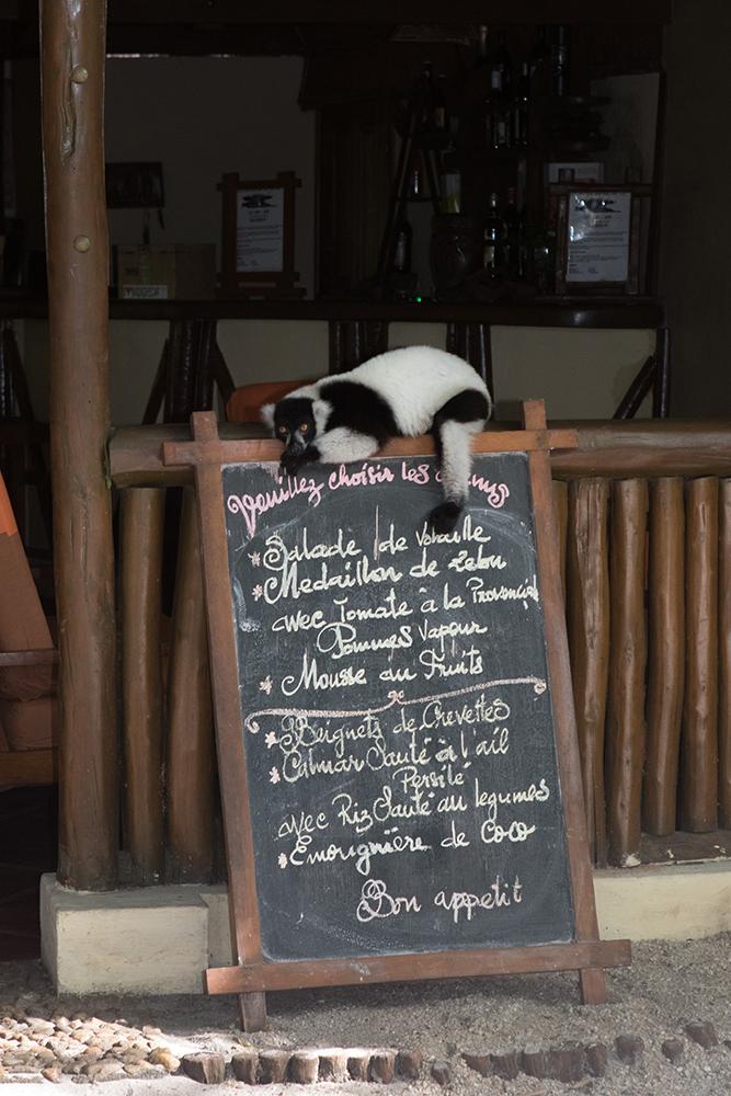 Schwarz-weißer Vari, Madagaskar